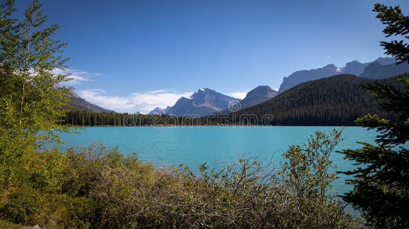 Looking South at Waterfowl Lake, glacier fed lake in the Canadian Rockies - off the Icefield Parkway, Canada royalty free stock photos