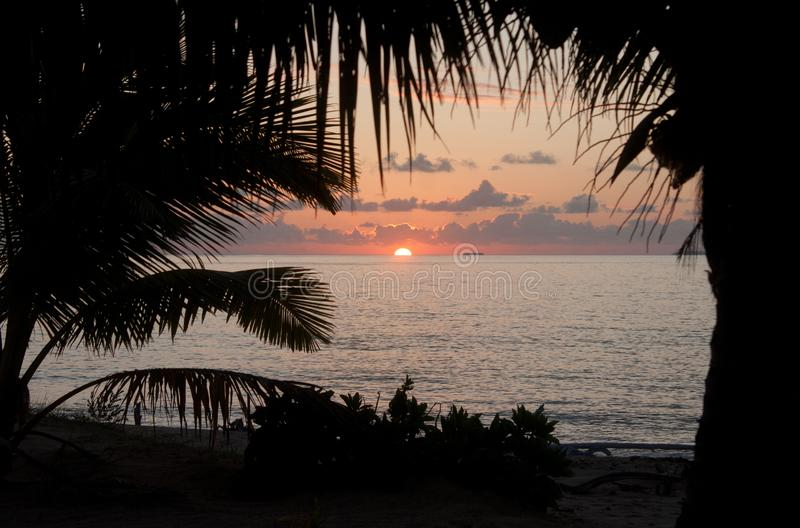 Looking at a sunset through the palm trees in Tonga royalty free stock images