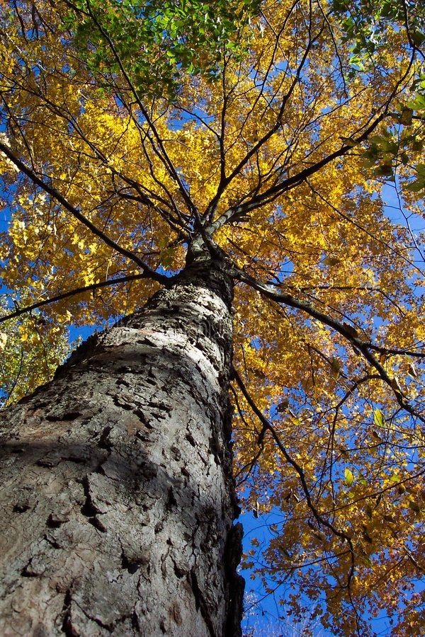 Download Looking Up stock photo. Image of walking, fall, catoctin - 8412