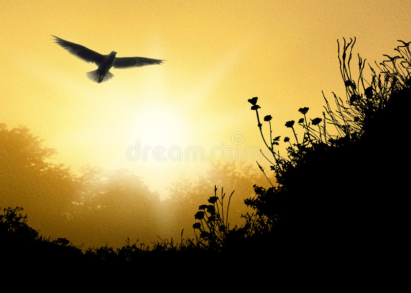 Download Looking Up A1 stock illustration. Image of daybreak, sunrise - 3166784