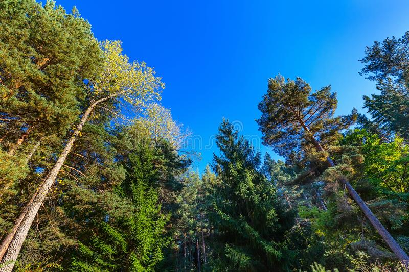 Looking up autumn trees forest background stock photos