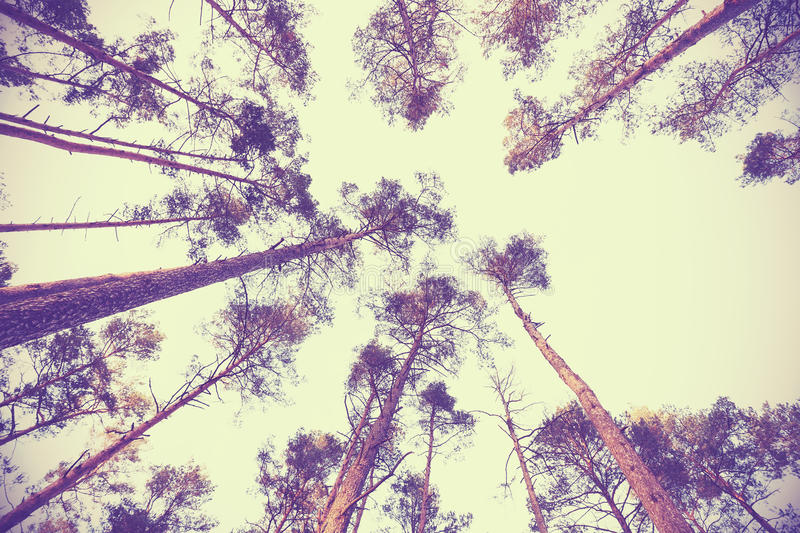 Looking up through autumn trees, retro filtered background stock photo