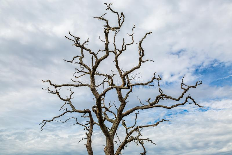Bare Tree Branches. Looking up at bare tree branches against a cloudy sky royalty free stock images