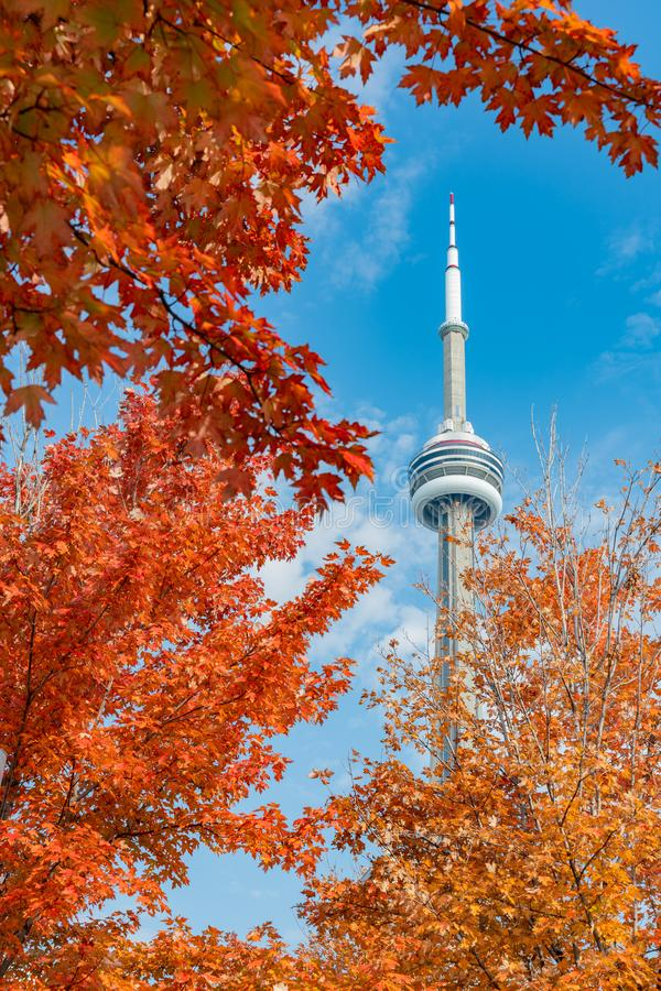 CN Tower with lovely red maple leaves. Looking up the CN Tower with lovely red maple leaves at Toronto, Canada stock photography