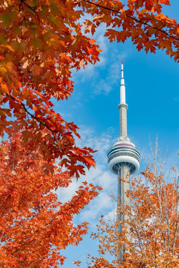 CN Tower with lovely red maple leaves. Looking up the CN Tower with lovely red maple leaves at Toronto, Canada stock photo