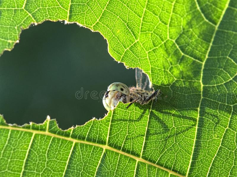 Looking up dragonfly at a hole stock photo