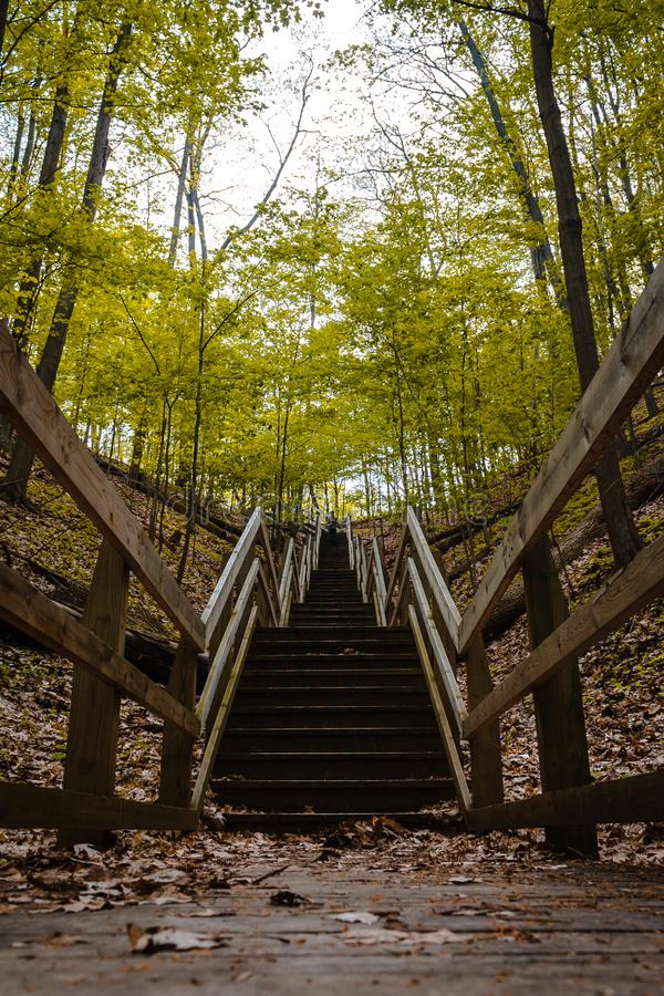 Looking up the stairs on a wooded trail in Pj Hoffmaster Park stock image