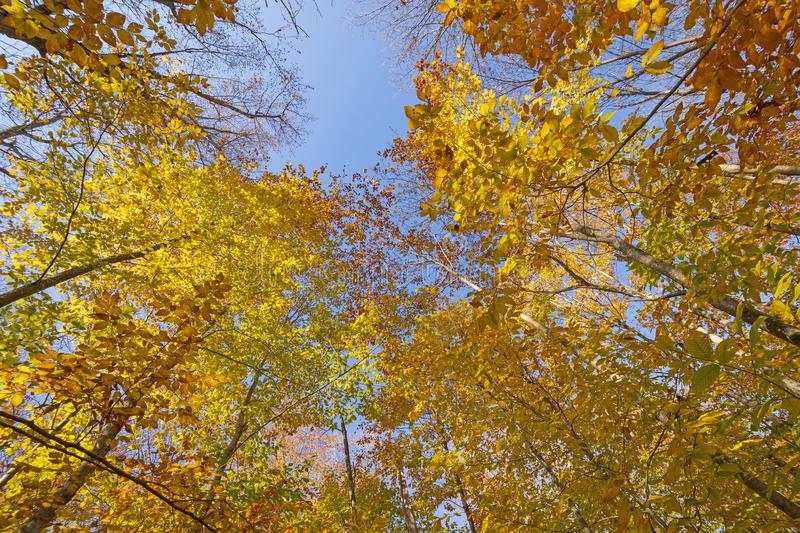 Looking up to the Autumn Colors stock photo