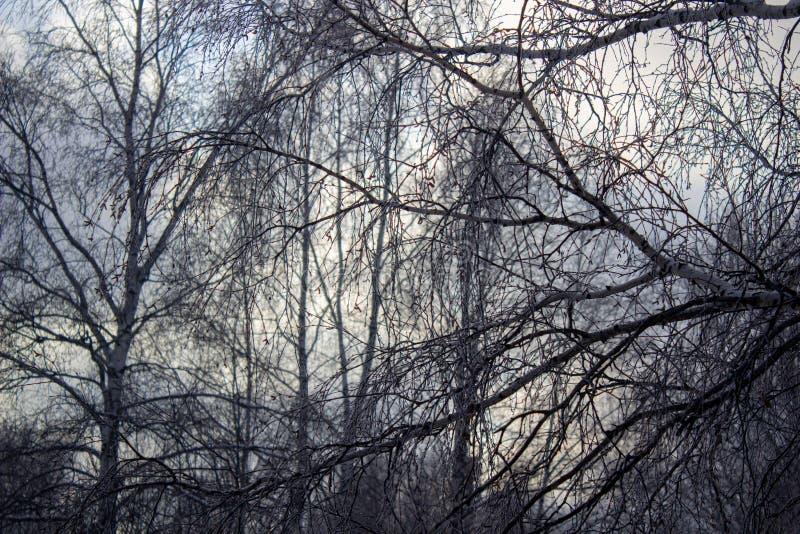 Contemplating Change: Woodland - December
