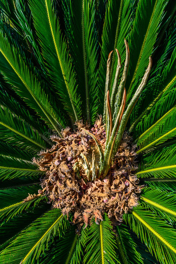 Looking Up To Palm Tree. Green texture background stock images