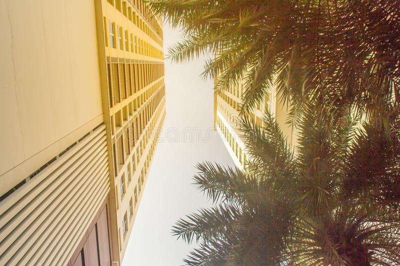 Looking up to skyscraper towers into the sky with palm trees on foreground. Sunny sky with palm tree decoration in modern apartmen royalty free stock photos