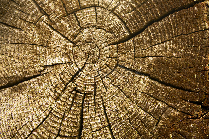 Download Looking Into The Wood Royalty Free Stock Photos - Image: 6611698