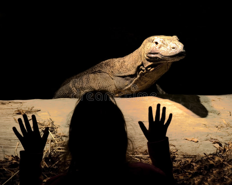 Download Lookout! stock image. Image of wildlife, frighten, reptile - 126547