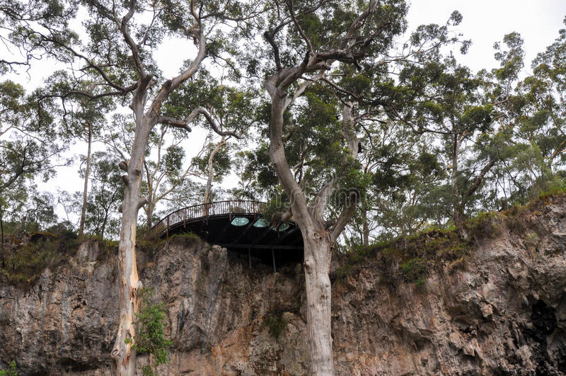 Lookout over Sunken Forest. Viewing platform overlooking the limestone formations in the tall Karri tree sunken forest at Lake Cave nature area in Margaret River stock photos