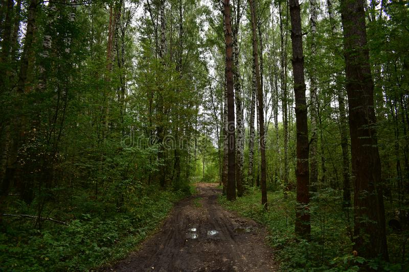 Looks great shady forest road is wide enough, the path in the woods miles and miles of quiet royalty free stock photos