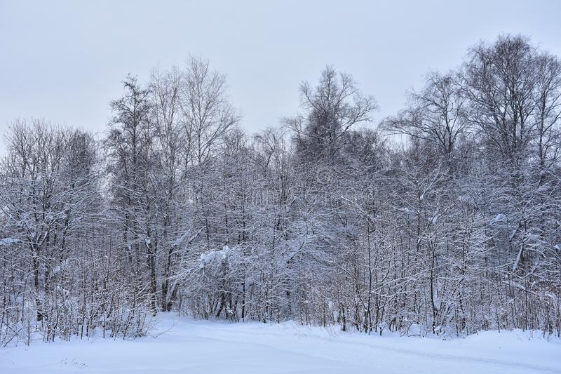 Looks great winter forest and how good it is for a walk. Everything around is white, covered with soft fluffy snow stock photos