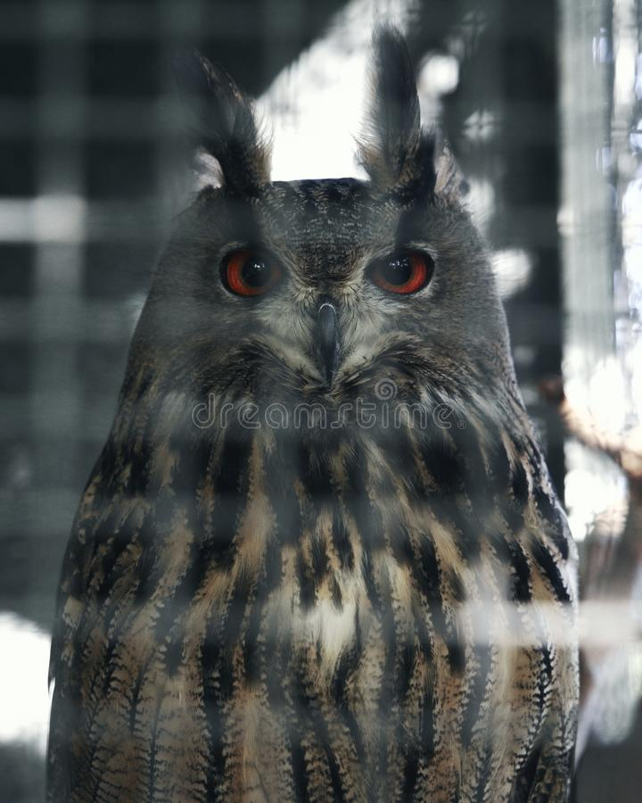 Looks wise owl. Beautiful bird stock image