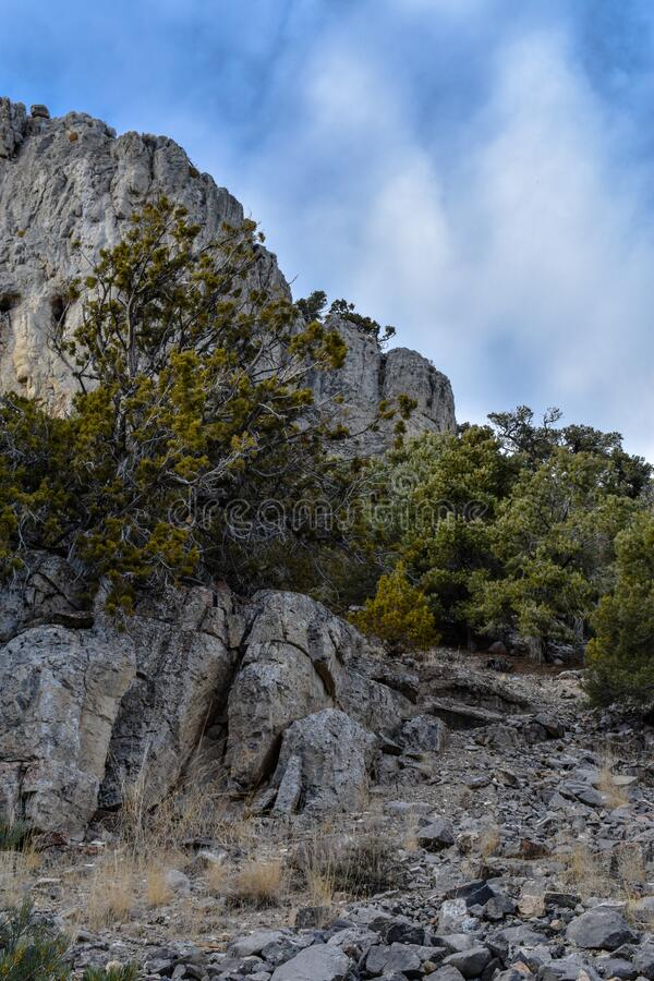 Looming Desert Cliff side With Trees stock images