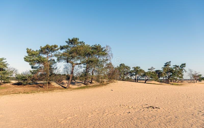 Loonse和Drunense沙丘 免版税库存照片