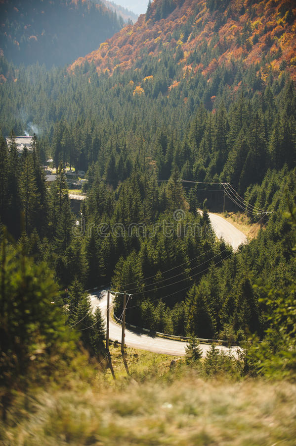 Loop Road at Forest royalty free stock photo