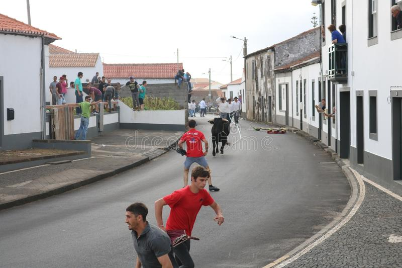 A loose bull. Traditional azores bullfighting feast. Portugal. Europe. A bull is released in a village center, Graciosa, Azores , Portugal. While several men stock photos