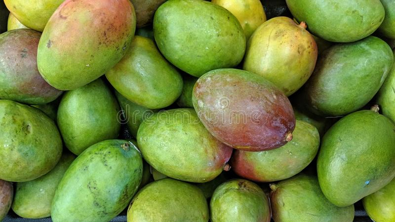 Loose mangoes. Can be used as a background or wallpaper and for other possibilities or to modify to your taste vector illustration