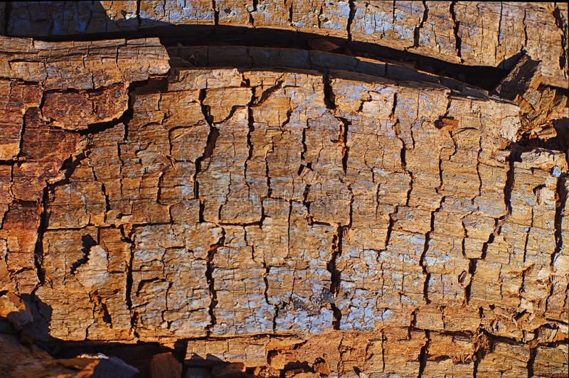 Loose wood structure in the sunlight stock photography