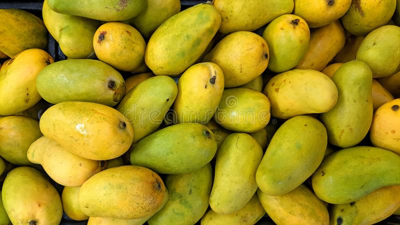 Loose yellow mangoes. Can be used as a background or wallpaper and for other possibility or to modify to your taste stock illustration