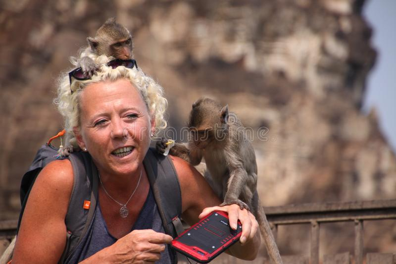 LOPBURI THAILAND - JANUARI 9 2019: Turist- kvinna som anfallas av apor som stjäler hennes solglasögon royaltyfria foton