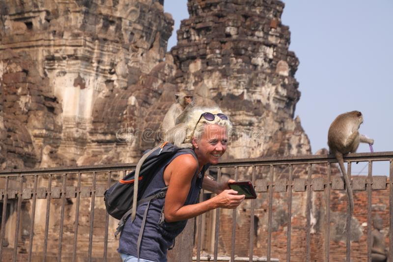 LOPBURI, THAILAND - JANUARY 9 2019: Tourist Woman attacked by monkeys stealing her sunglasses royalty free stock photography