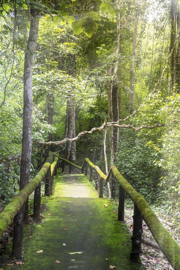 Lopend sleep met groene mosss in het natiepark wordt behandeld in Thailand dat royalty-vrije stock fotografie