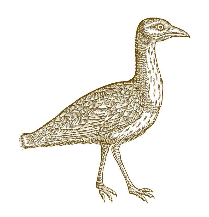Lopende Europees-Aziatische steenwulp, Europees-Aziatische dik-knie of oedicnemus van stenen-wulpburhinus Illustratie na een hist royalty-vrije illustratie