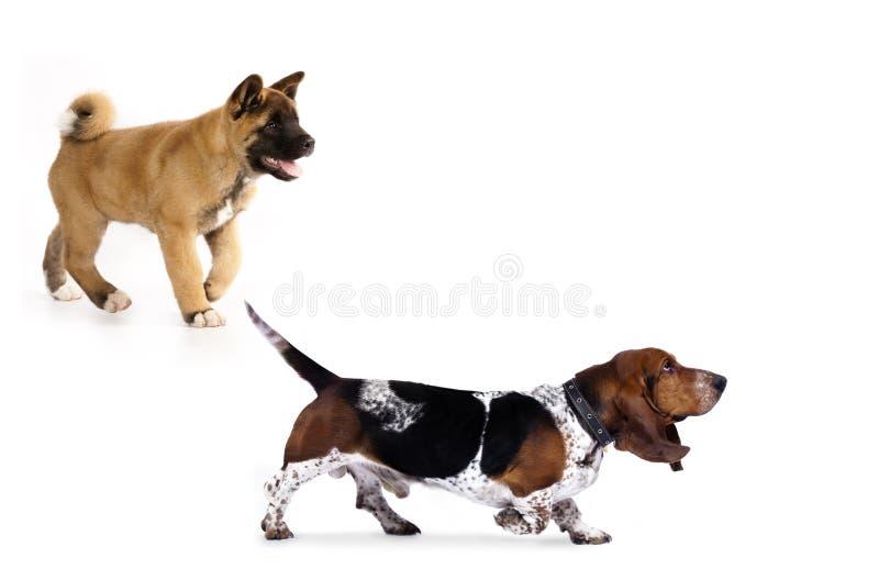 Lopende hond, stock foto's