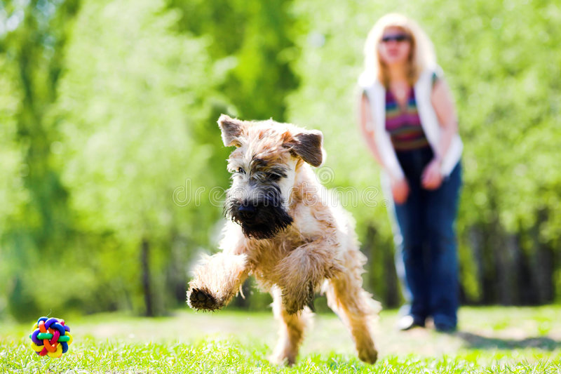 Lopende hond op groen gras royalty-vrije stock foto