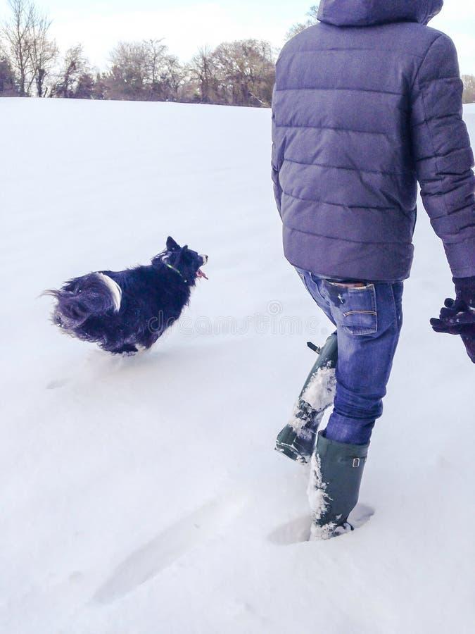 Lopende hond in sneeuw stock afbeelding
