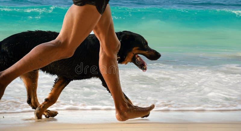 Lopende mens, hond op ochtendstrand stock foto's
