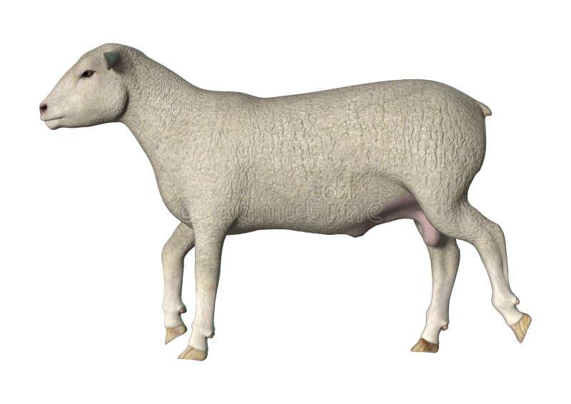 Lopende schapen stock illustratie