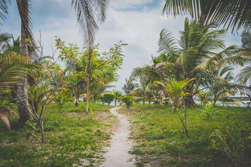 Lopende weg, vuilsleep, gang door tropisch tuinland stock foto