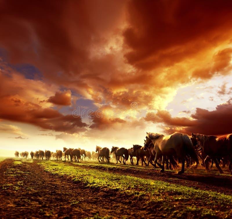 Lopende wild paarden