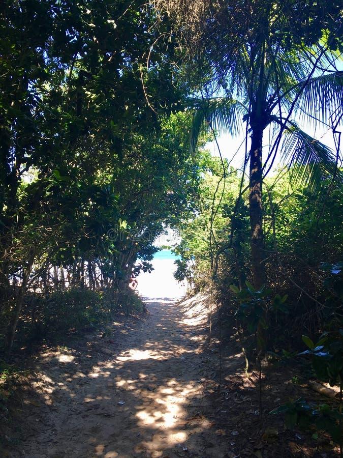 Lopes Mendes plaża w Ilha Grande obraz royalty free