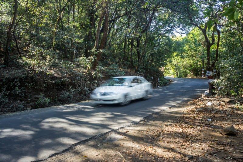 Lopp, långt drev och skogväg arkivfoto