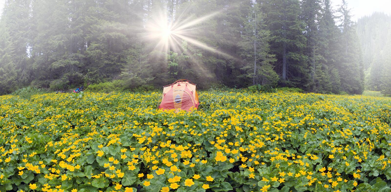 Lopp med blomman carpathians arkivbilder