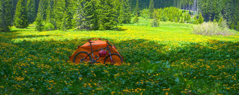 Lopp med blomman carpathians royaltyfria foton