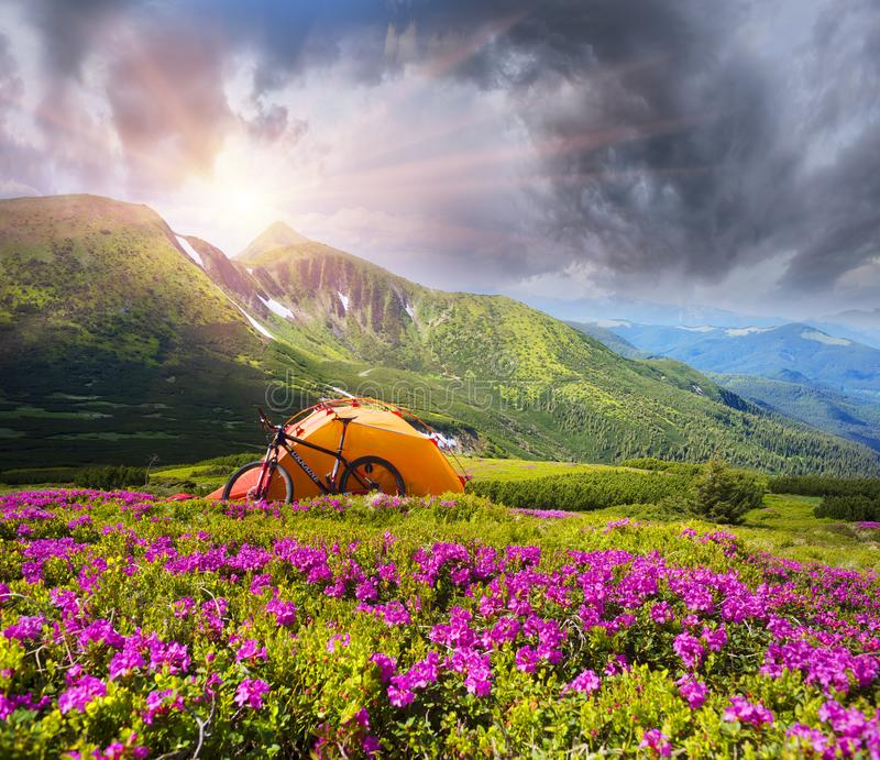 Lopp med blomman carpathians arkivfoto