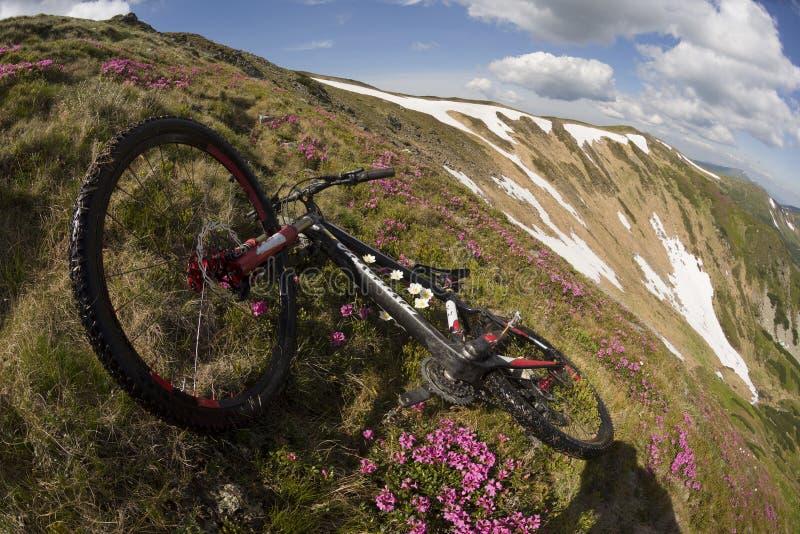 Lopp med blomman carpathians arkivfoton