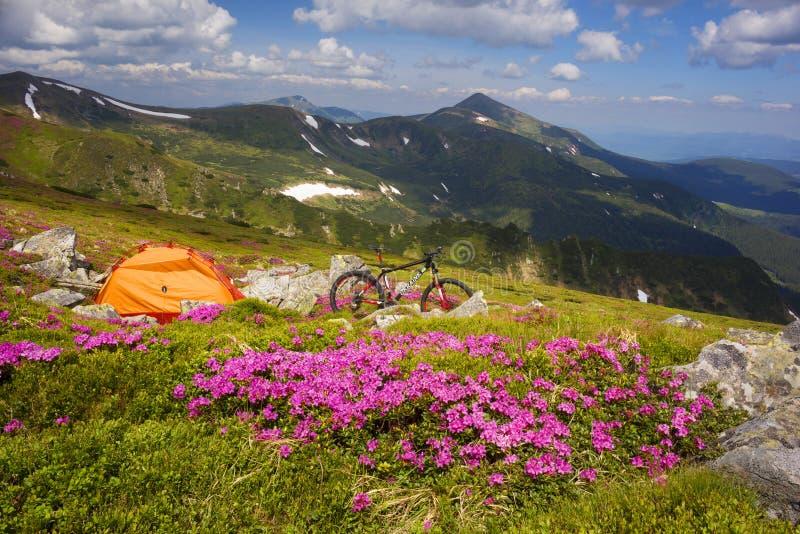 Lopp med blomman carpathians fotografering för bildbyråer
