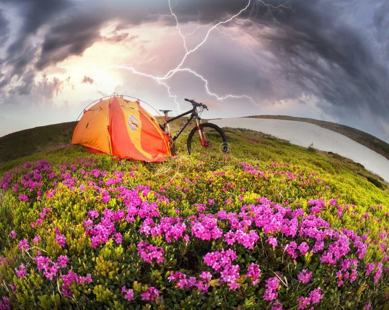 Lopp med blomman carpathians royaltyfri fotografi