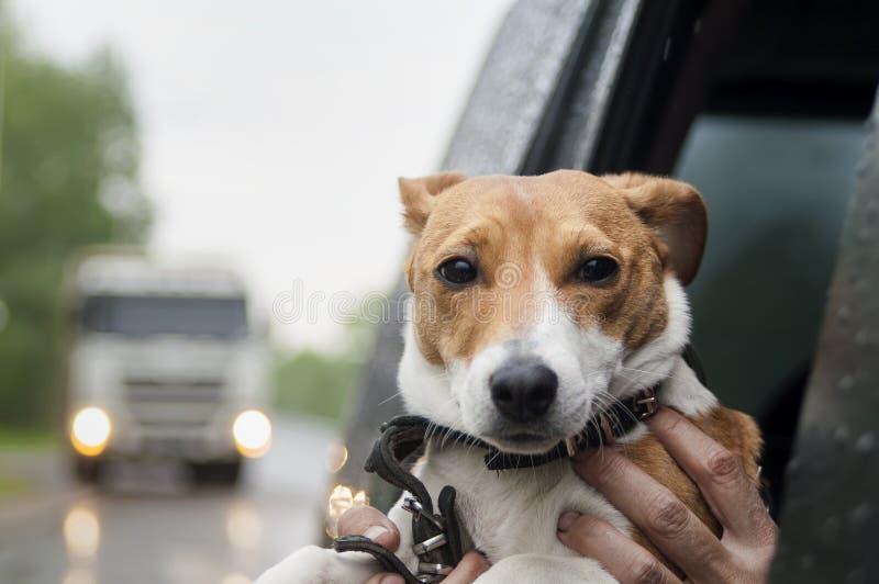 Lopp med husdjur arkivfoto
