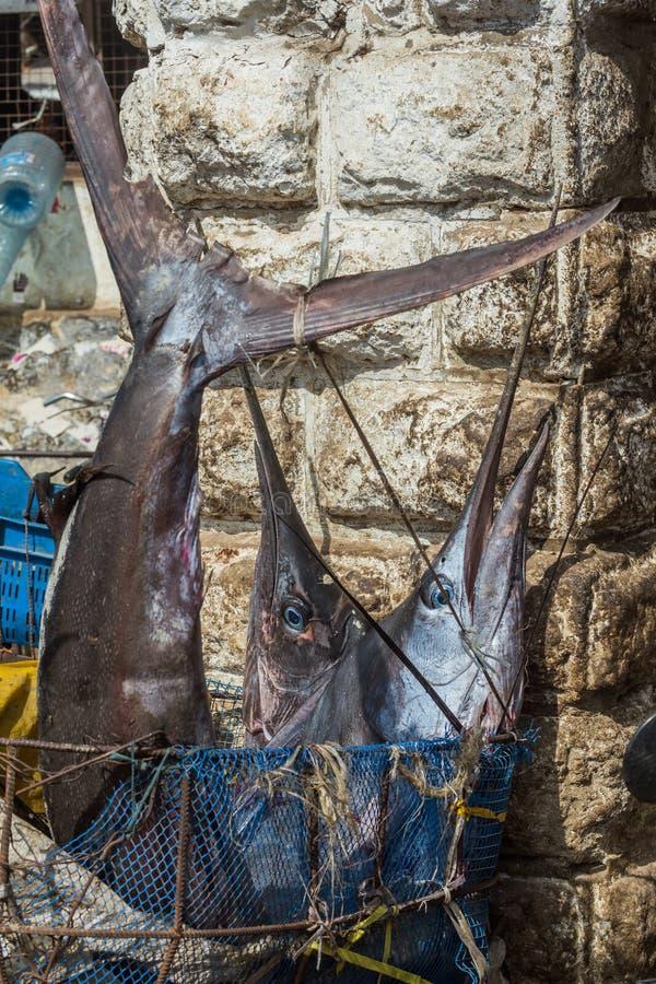 Lopp runt om Afrika marlinfisk i marknaden arkivbilder