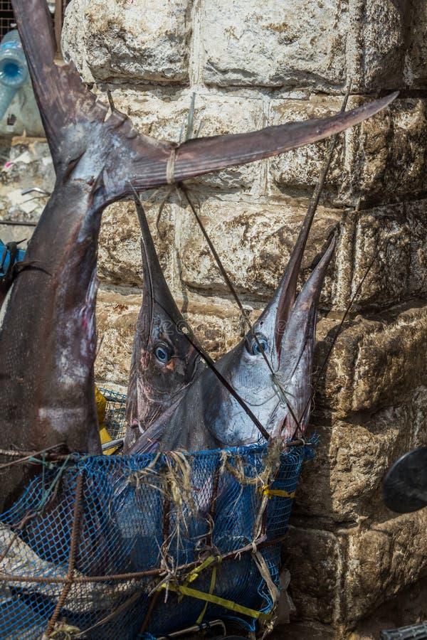 Lopp runt om Afrika marlinfisk i marknaden arkivbild